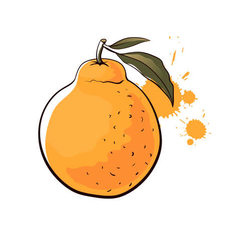 Harnabong orange. Hand drawn vector illustration