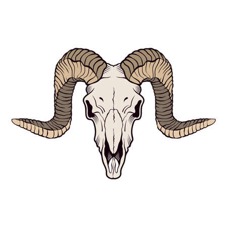 Ram skull isolated on white. Vector illustration. Illusztráció