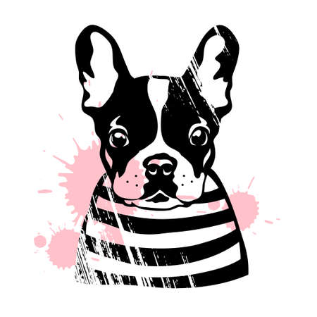 French bulldog. Cute black and white dog in a striped sweater. Vector illustration