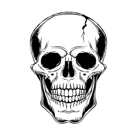 Human skull. Front view. Vector black and white hand drawn illustration Illusztráció