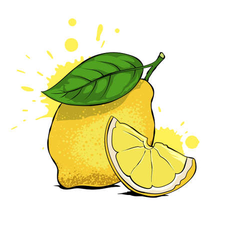 Fresh lemon with leaf, lemon slice. Hand drawn vector illustration