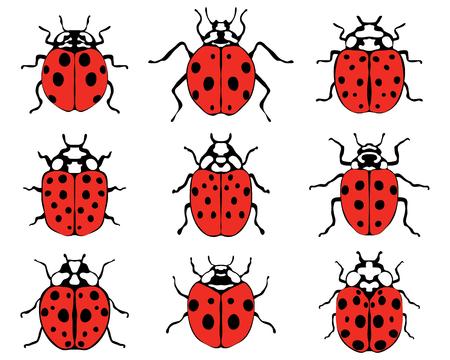 caricatura mosca: Conjunto de diversas mariquitas alegres, ilustración vectorial