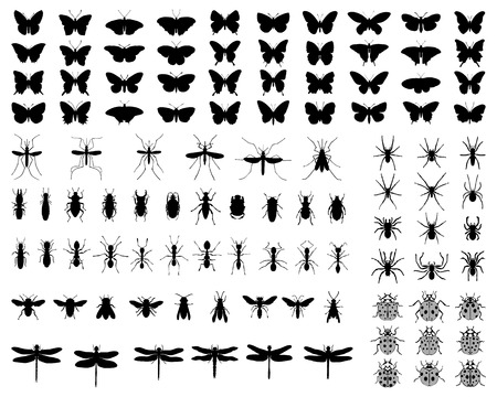 arthropod: Black silhouettes of insects on white background