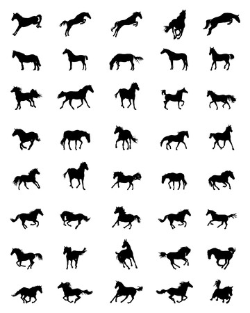 Black silhouettes of horses on a white background