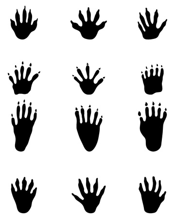 Black footprints of raccoon on a white background Illustration