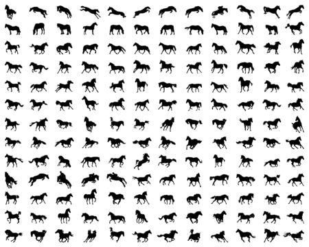 Duży zestaw sylwetek koni na tle