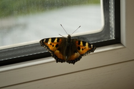 Butterfly on windowsill