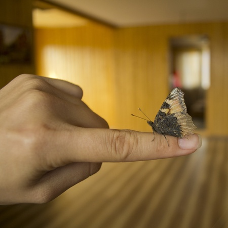 mimetism: Butterfly on forfinger