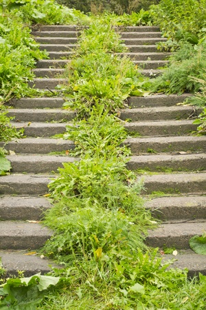 Overgrown stairs Stock Photo
