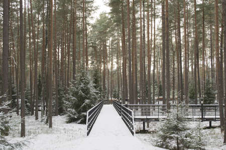 the Katyn forest and scaffold in it Stock Photo - 12667489