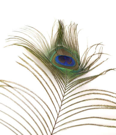 Colorful peacock feather detail isolated on white background Banco de Imagens