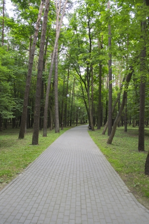 elevated walkway: Foot way among the coniferous trees in the evening