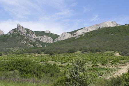 Vineyard in mountains of Crimea, Ukraine