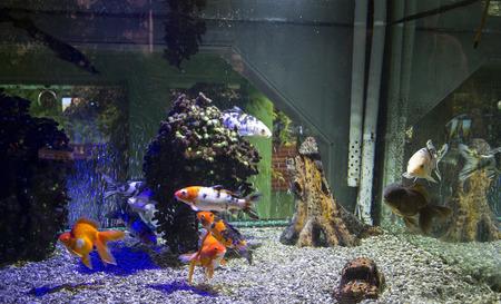 Colorful Saltwater Aquarium