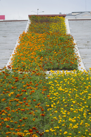 Design of a staircase with marigolds Stock Photo