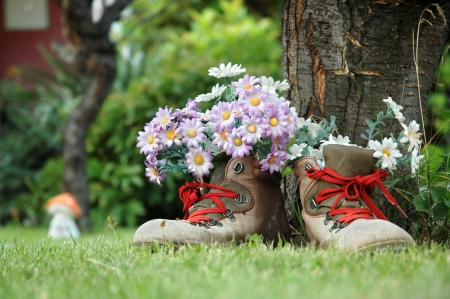 repurpose: Flowers in old shoes with red shoelaces on lawn Stock Photo