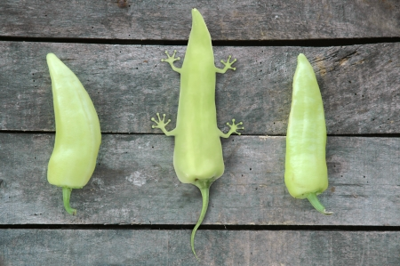 genetically modified organisms: composition of three green peppers - two peppers with one imagined genetically modified pepper with legs as a result of animal molecules in it -