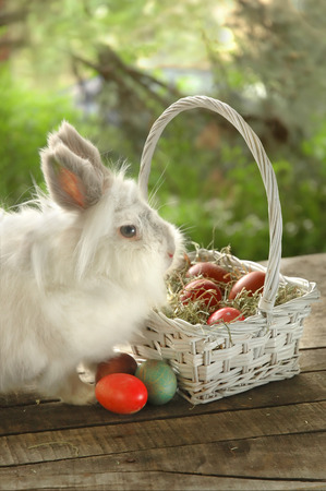 Cropped image of  bunny near white basket with Easter eggs, on old wooden table, outdoor Imagens