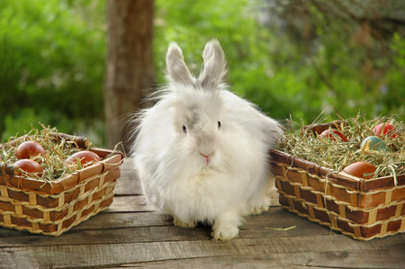 Rabbit between baskets full with Easter eggs on wooden table, outdoor Imagens