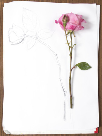 vertical hand drawing and image of roses on white paper, on table