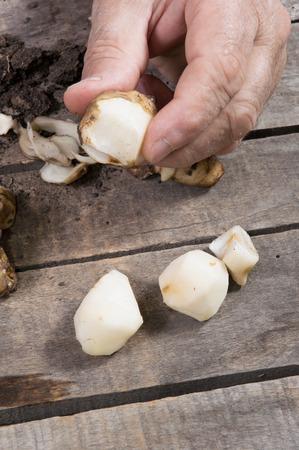 Man showing peeled raw Jerusalem artichoke