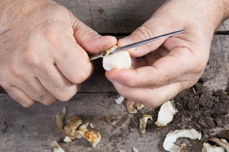 Close up of male hands chopping Jerusalem artichoke