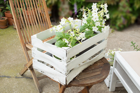 White spring  flowers in white wooden basket