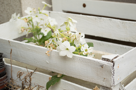 Focus on one white flower in wooden basket