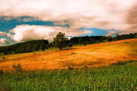serbia landscape: beautiful summer landscape at Zlatibor, Serbia
