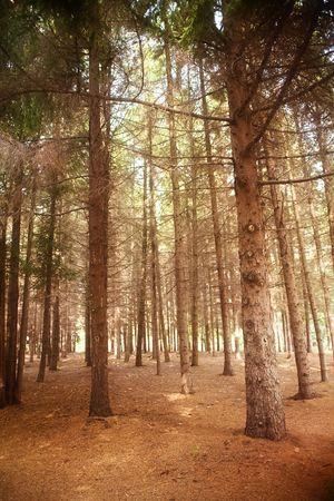 autmn: forest lanscape in autmn