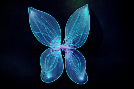 pair of fairy wings in blue color on dark background photo
