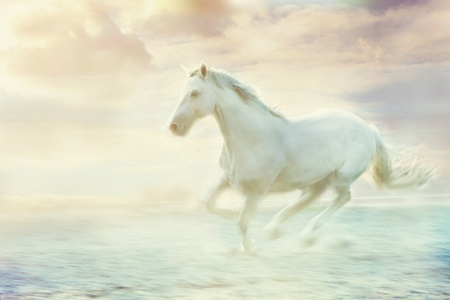 horses in the wild: white running horse, sky fantasy background