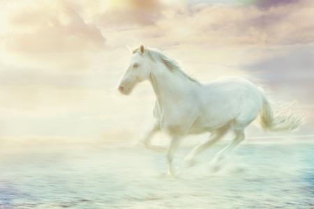 wild horse: white running horse, sky fantasy background