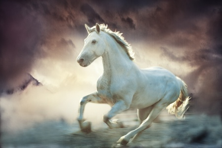 horses in the wild: white running horse, sky fantasy background, small amount of grain added Stock Photo