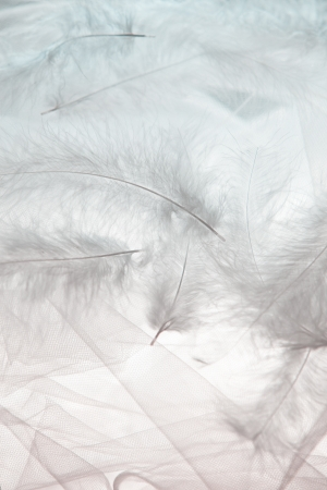 softly: airily white feathers and tulle background