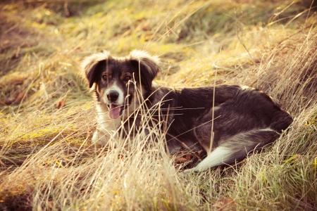 winter day: pariah dog sit in yellow grass warm winter day retro colors