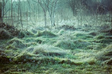 flattened: flattened green grass winter morning