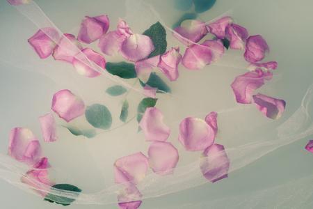 rosas blancas: pétalos de rosa y hojas flotan en el agua lechosa con tul blanco sobre