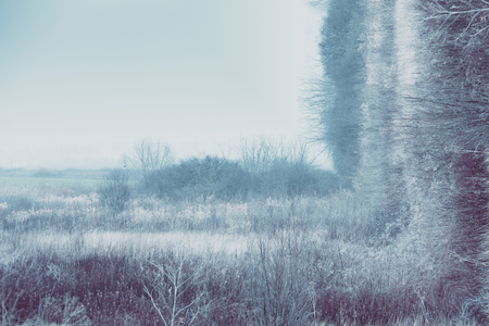 inception: blue misty winter landscape with grass and bushes, bend photo manipulation