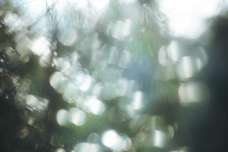 evergreen: defocused evergreen branch and sun light background Stock Photo