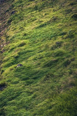 grass beautiful: beautiful green mountain grass background Stock Photo