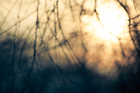 purposely: abstract background sunset through branches purposely  defocused