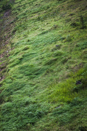 unaffected: beautiful fresh green grass on the mountain natural background Stock Photo