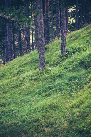 grass beautiful: beautiful clean lush green grass in the evergreen forest  Stock Photo