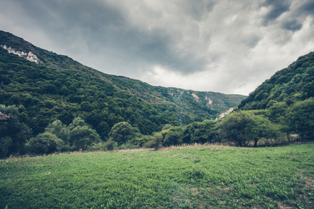 green valley and wood  in a mountain area landscape