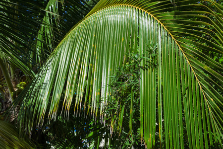 tropical coconut palm leaves natural background Stok Fotoğraf