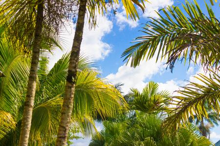 tropical coconut palms and sky natural background Reklamní fotografie