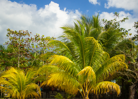 tropical background with palm trees and sky Jamaica