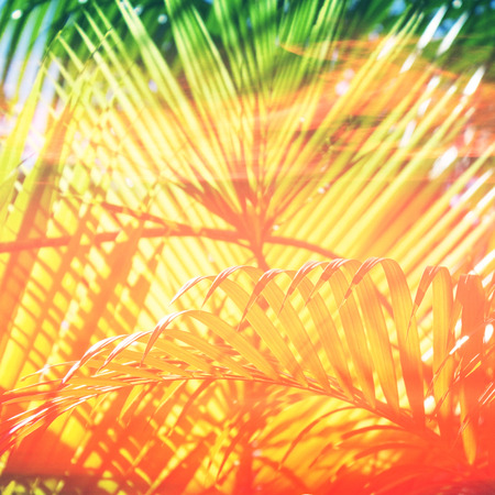 tropical summer background palms and sunlight close up