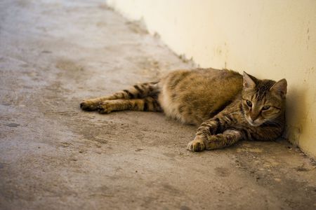 Stray pregnant cat lying in the alley
